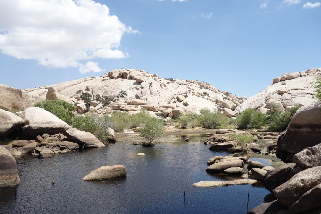 Staudamm am Barker Dam Trail, Joshua Tree NP