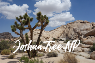 Joshua-Tree-NP_USA