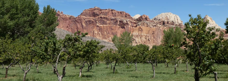 Obstwiese im Capitol Reef Nationalpark