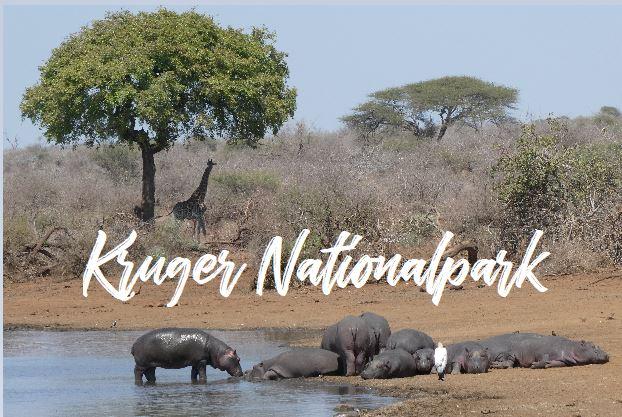 KrugerNationalpark_Titel